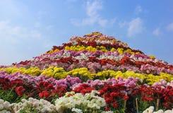Festival enorme del fiore di Chandigarh di disposizione dei fiori del crisantemo Fotografia Stock