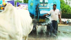 Festival indien de voiture de temple, jet d'homme l'eau dans le contrôle de route sur la chaleur de route de rue banque de vidéos