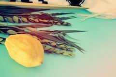 Festival juif de Sukkot Symboles traditionnels les quatre espèces : Etrog, lulav, hadas, arava photo libre de droits