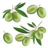 Festival olives oil icon set, realistic style vector illustration