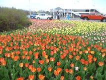 Festival ottawa del tulipano Fotografia Stock