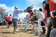 Festival que compite con del búfalo Foto de archivo libre de regalías