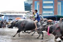 Festival que compite con del búfalo Imagen de archivo libre de regalías