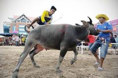 Festival que compite con del búfalo Fotos de archivo libres de regalías
