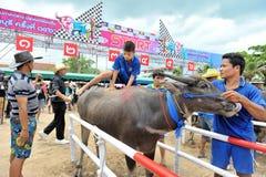 Festival que compite con del búfalo Foto de archivo