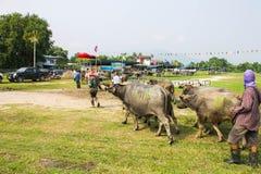 Festival que compite con del búfalo anual imagenes de archivo