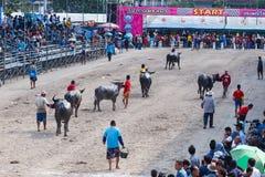 Festival que compite con del búfalo en Chonburi Tailandia Foto de archivo