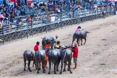 Festival que compite con del búfalo en Chonburi Tailandia Fotografía de archivo libre de regalías