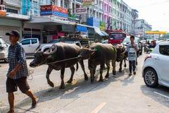 Festival que compite con del búfalo anual Imagen de archivo
