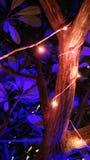 Festival von Lichtern Lizenzfreie Stockfotos