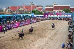 Festivalbuffels het rennen Stock Foto