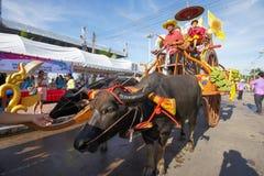 Festivalbuffels het rennen Royalty-vrije Stock Afbeeldingen