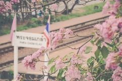 Festivales de la flor de cerezo imagen de archivo libre de regalías