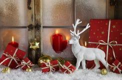 Festivamente decoración de la Navidad con regalos rojos y un reinde blanco Fotos de archivo