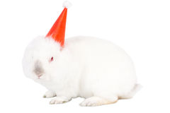 Festive Easter bunny in a party hat Royalty Free Stock Images