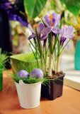 Flowers and Easter eggs Royalty Free Stock Photo