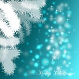 Festive background with Christmas trees. On turquoise background Royalty Free Stock Images