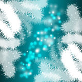 Festive background with Christmas trees. Vector festive background with Christmas trees on turquoise background for design Stock Photo