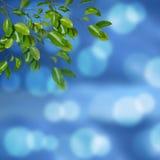 Festive background with defocused lights. Stock Image