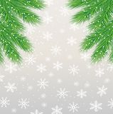 Festive background with the green branches of christmas tree Stock Image