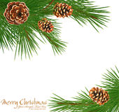 Festive  background with green spruce Royalty Free Stock Image