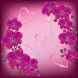 Festive background orchids. Festive background  for life events with purple orchids and decorations Stock Image