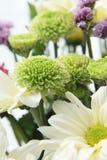 Festive background of summer flowers Stock Photos