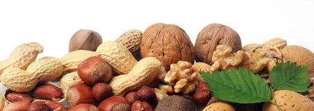 Festive banner of mixed whole fresh nuts. In their shells including almonds, hazelnuts, brazil nuts, peanuts and walnuts both shelled and whole with green Royalty Free Stock Photography