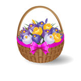 Festive basket with crocuses and ribbon with bow. Vector Illustration. Basket with crocuses Stock Photo