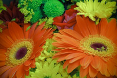Festive bouquet with gerbera flowers Royalty Free Stock Photos