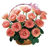 Festive bouquet of pink roses. Royalty Free Stock Photo