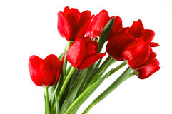Festive bouquet of red tulips royalty free stock photo