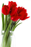 Festive bouquet of red tulips. Festive bouquet red tulips in transparent glassy vase Stock Photography