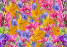 Festive bright collage of flowers. Banner or background, horizontal Stock Images