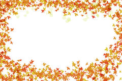Festive bright frame of autumn leaves and transparent petal framing with white Stock Images