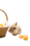 Festive Bunny is sitting near the basket and egg Royalty Free Stock Photo