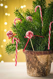 Festive cake pops in Christmas decoration Royalty Free Stock Photography