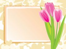 Festive card with pink tulips Royalty Free Stock Photo