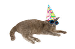 Festive cat wearing sunglasses and hat Royalty Free Stock Image