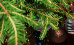Festive Christmas background - fir-Tree branches in the foreground, the background is blurred Royalty Free Stock Images