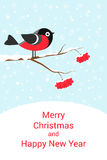 Festive Christmas card. Christmas card with bullfinch on snow-covered branch of a mountain ash Stock Images