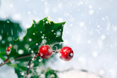 Festive Christmas holly background. With bright red berries and spiky green leaves amongst falling snowflakes with copyspace Royalty Free Stock Images