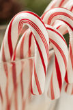 Festive Christmas Peppermint Candy Cane Royalty Free Stock Photos