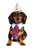 Festive dog. In a cap and tie Stock Photo