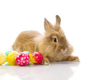 Festive Easter Bunny Stock Photography