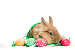 Festive Easter Bunny and colorful eggs Royalty Free Stock Photo