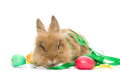 Festive Easter Bunny and eggs Stock Images