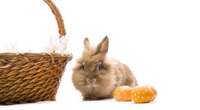 Festive Easter Bunny is sitting near the basket Royalty Free Stock Photo