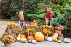 Festive fall decor with scarecrows, pumpkins, mums and hay bales. Festive decorations for fall with scarecrows, pumpkins, chrysanthemums and hay bales at Gibbs stock images