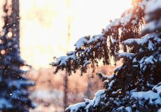 Festive fir branch covered with snow on a background of shiny ci. Rcles and snowflakes stock photo